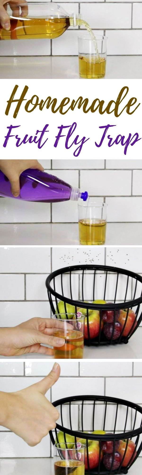 natural catch fruit fly traps instructions