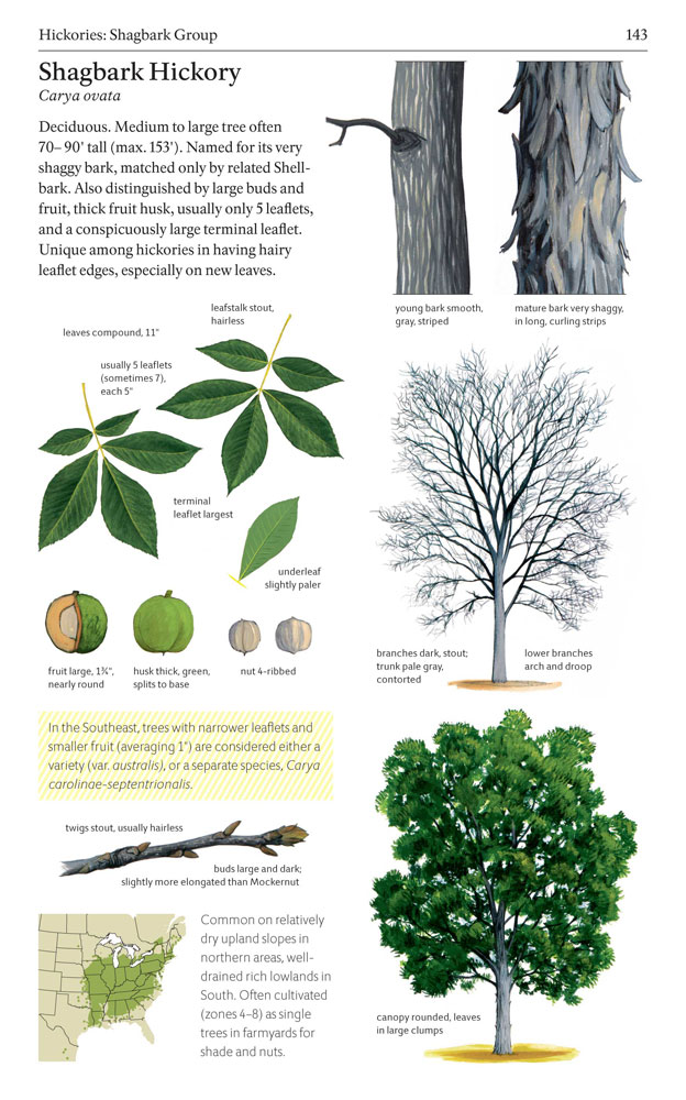 tree physiology author instructions
